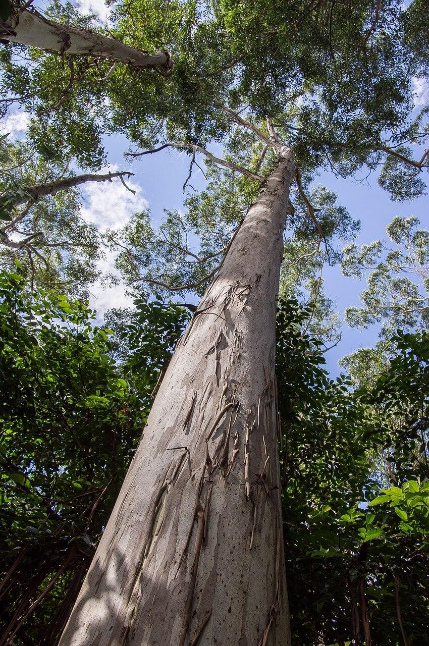 Fiber Thatch_Eucalyptus Grandis_Roof Structures01