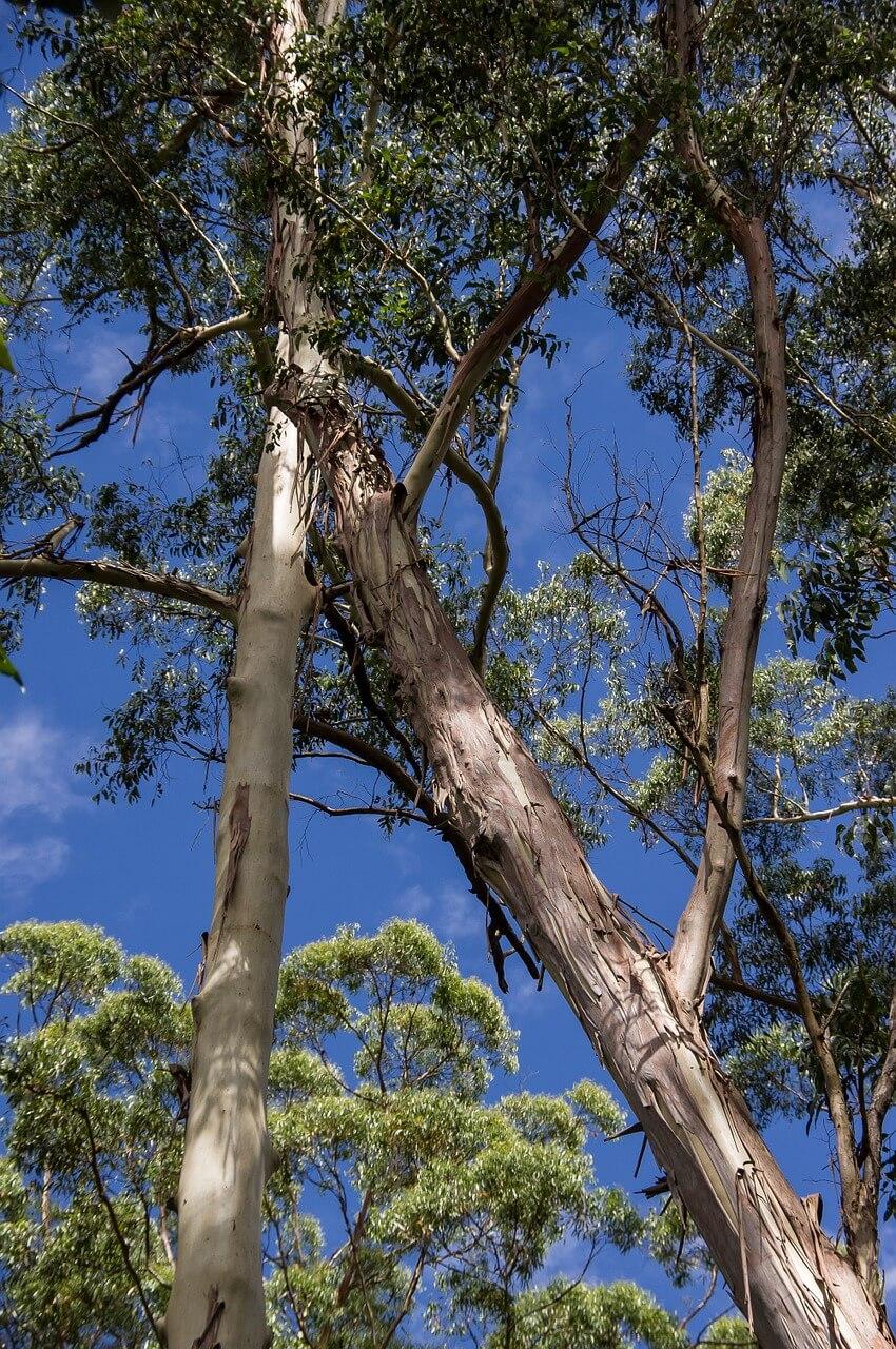Fiber Thatch_Eucalyptus Grandis_Roof Structures02